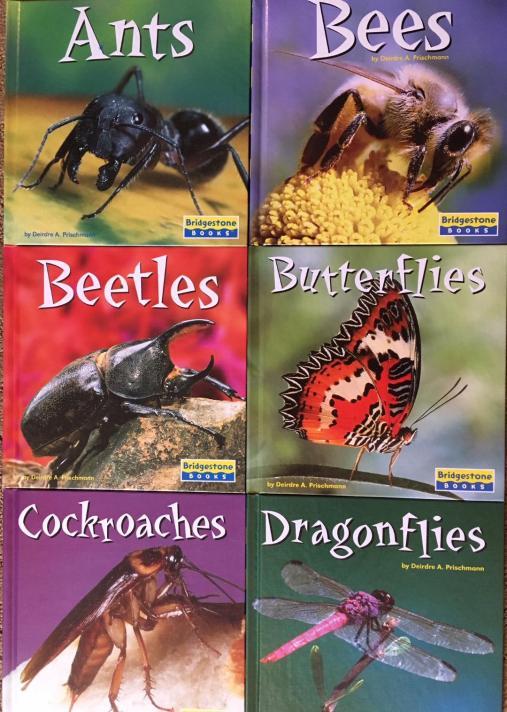 capstone bridgestone book images