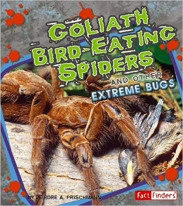 goliath bird eating spiders